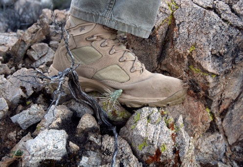 Arizona cholla cactus is no match for Wellco X Force boots. (It had to resort to a sneak attack; when I knelt down to shoot, it got me from behind . . . er . . . in the behind.)