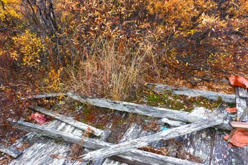 Encroaching Tundra