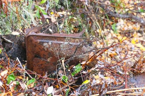 Rust-and-Lichen